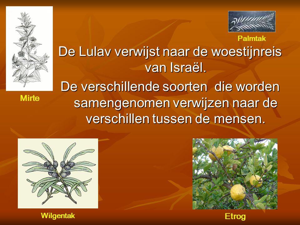 De Lulav verwijst naar de woestijnreis van Israël.