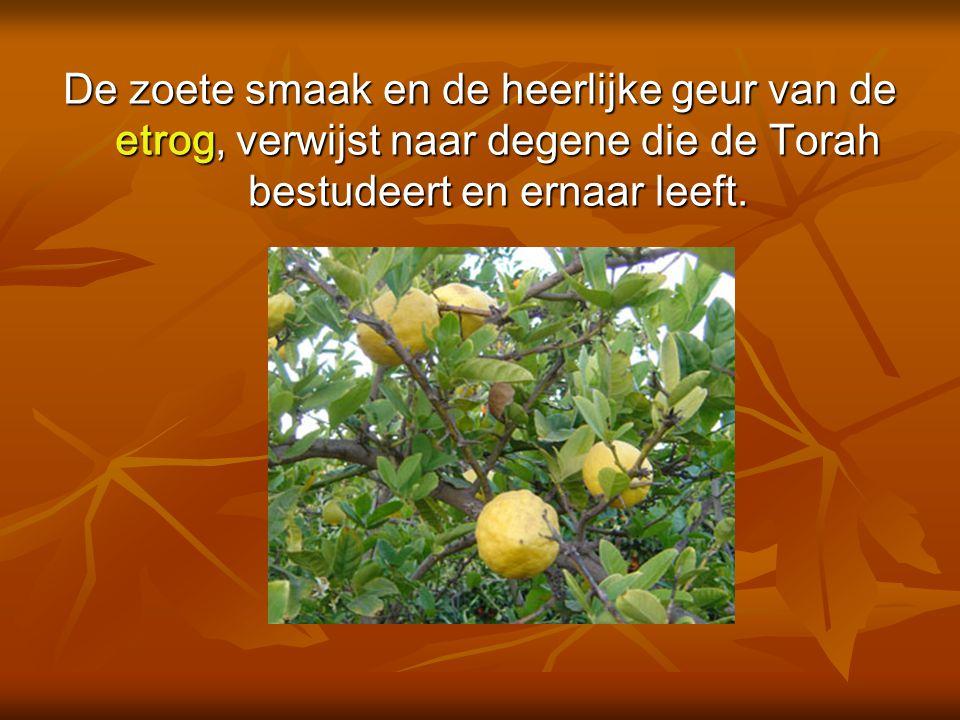 De zoete smaak en de heerlijke geur van de etrog, verwijst naar degene die de Torah bestudeert en ernaar leeft.