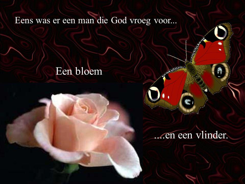 Een bloem ....en een vlinder.