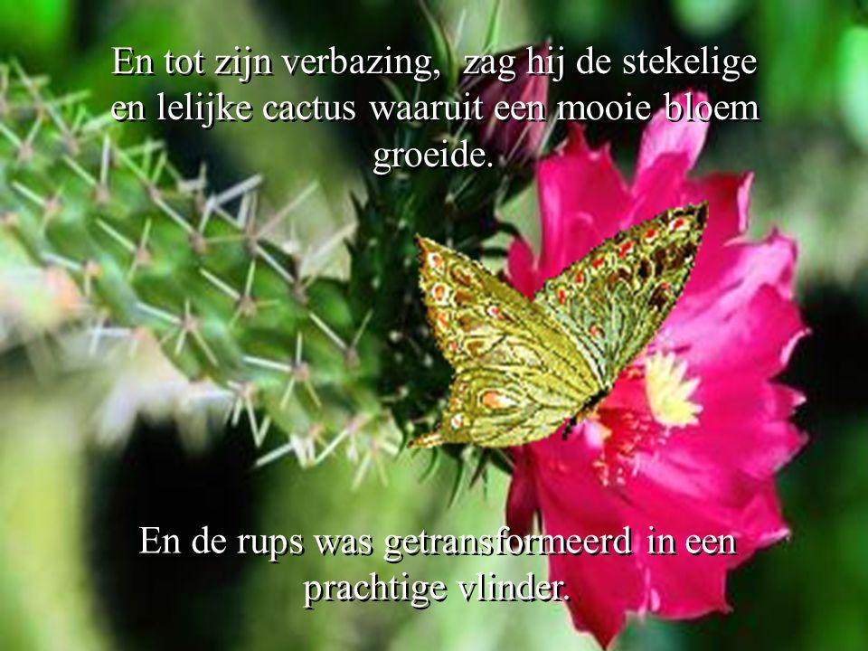 En de rups was getransformeerd in een prachtige vlinder.