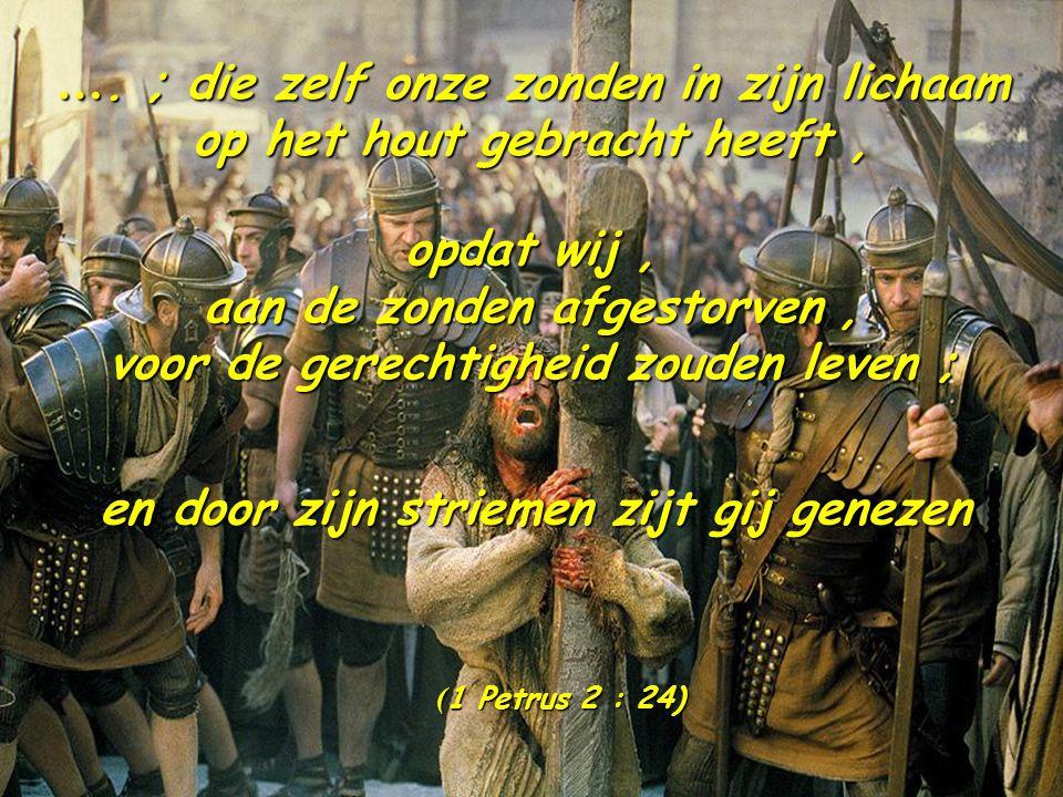 …. ; die zelf onze zonden in zijn lichaam op het hout gebracht heeft ,