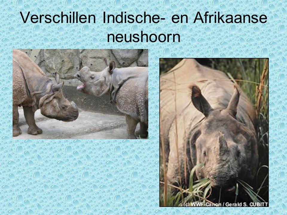 Verschillen Indische- en Afrikaanse neushoorn