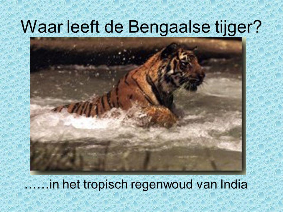 Waar leeft de Bengaalse tijger