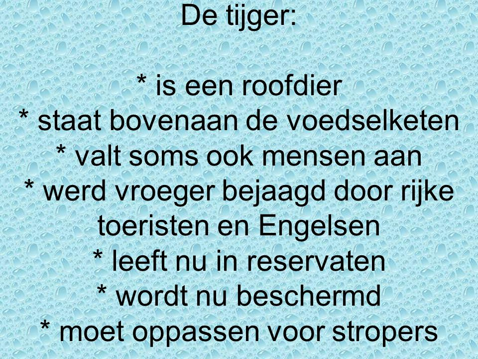 De tijger:. is een roofdier. staat bovenaan de voedselketen
