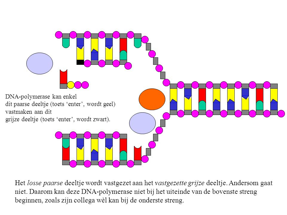 DNA-polymerase kan enkel