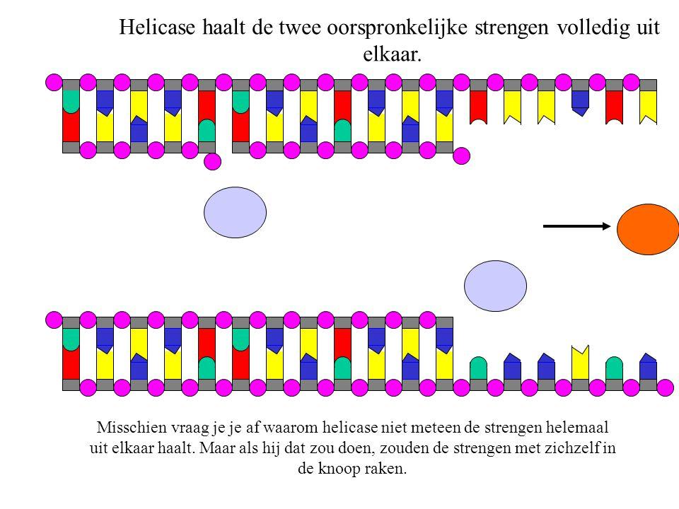 Helicase haalt de twee oorspronkelijke strengen volledig uit
