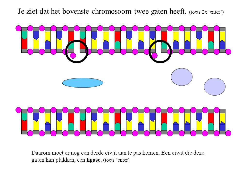 Je ziet dat het bovenste chromosoom twee gaten heeft