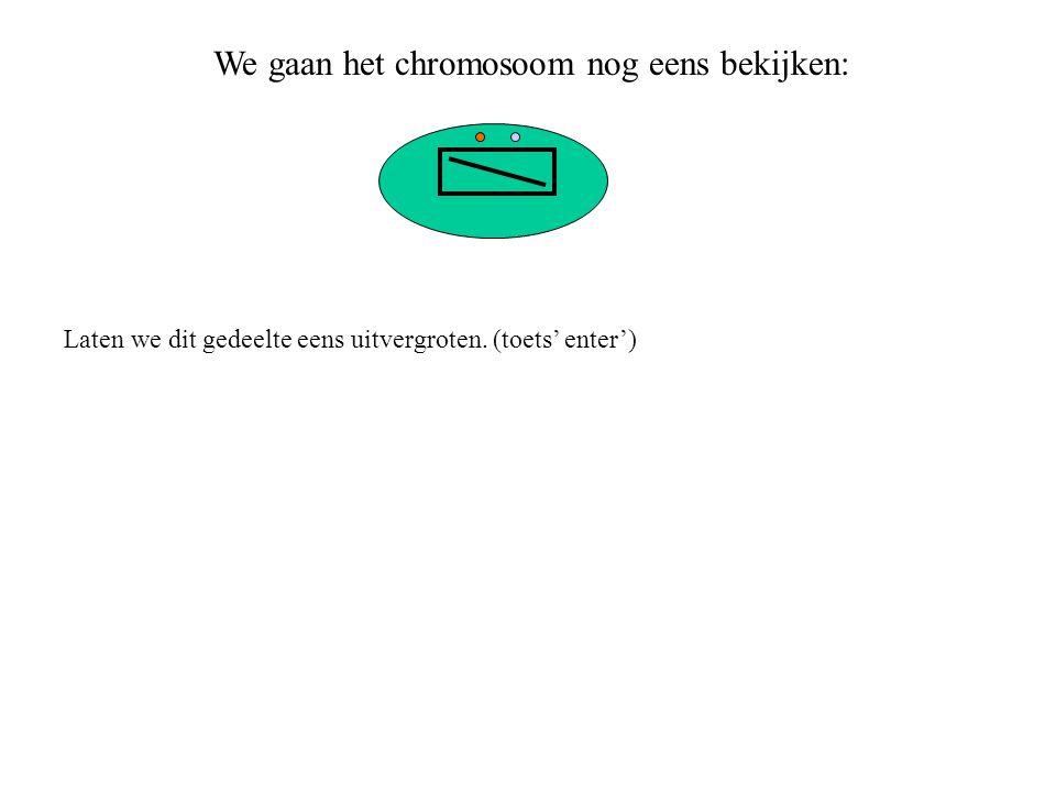 We gaan het chromosoom nog eens bekijken:
