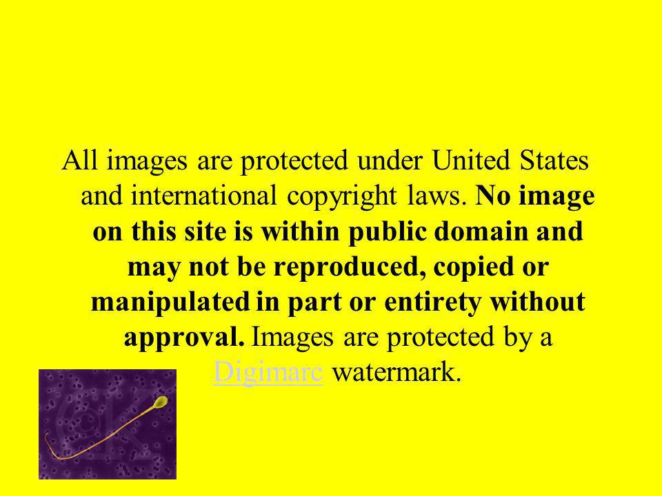 All images are protected under United States and international copyright laws.