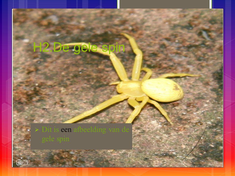 H2.De gele spin Dit is een afbeelding van de gele spin