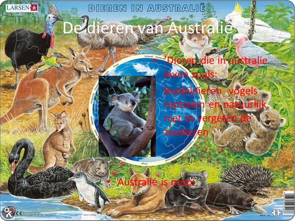 De dieren van Australié