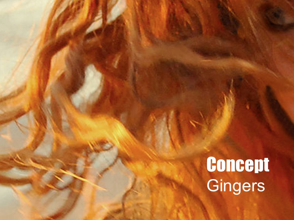 Concept Gingers