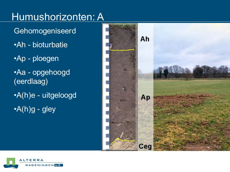 Humushorizonten: A Gehomogeniseerd Ah - bioturbatie Ap - ploegen