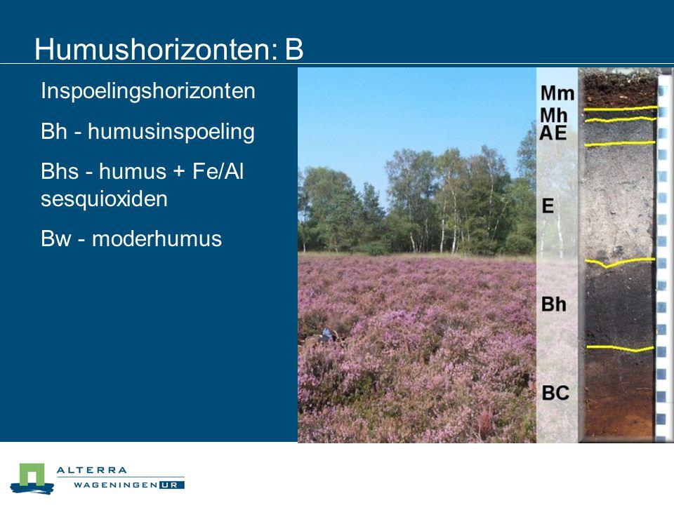 Humushorizonten: B Inspoelingshorizonten Bh - humusinspoeling