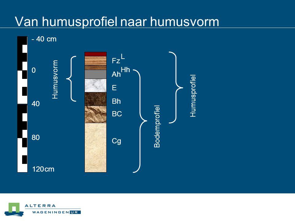 Van humusprofiel naar humusvorm