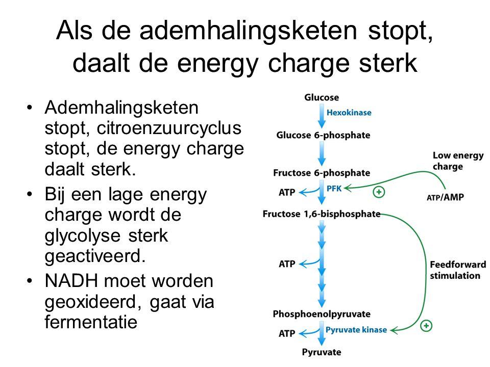 Als de ademhalingsketen stopt, daalt de energy charge sterk