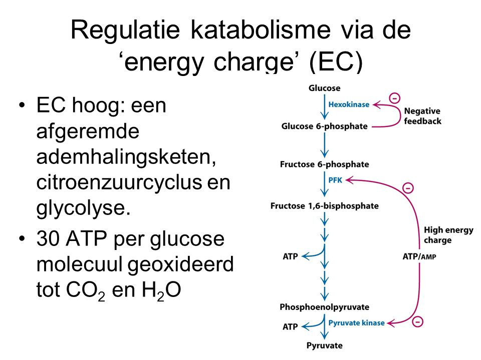 Regulatie katabolisme via de 'energy charge' (EC)