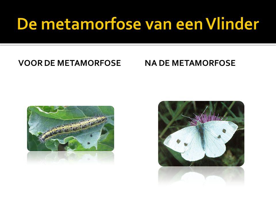 De metamorfose van een Vlinder