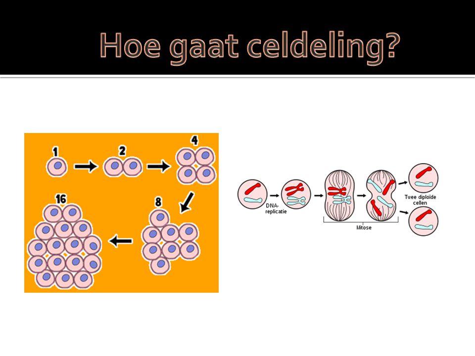 Hoe gaat celdeling