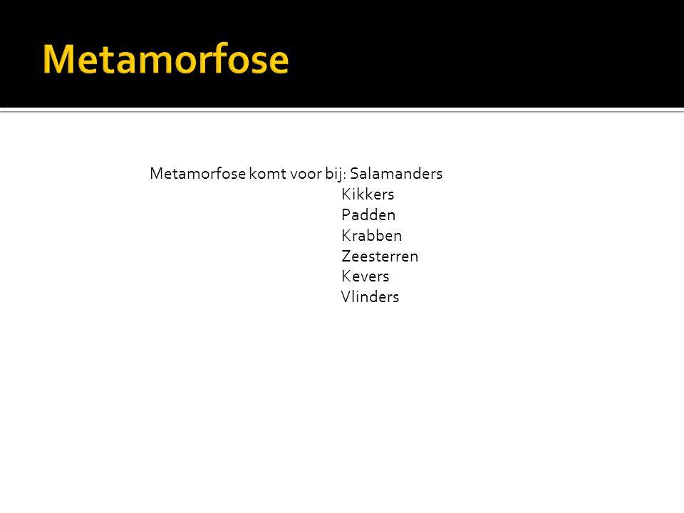 Metamorfose Metamorfose komt voor bij: Salamanders Kikkers Padden