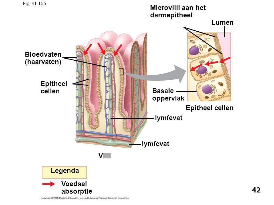 Bloedvaten (haarvaten)