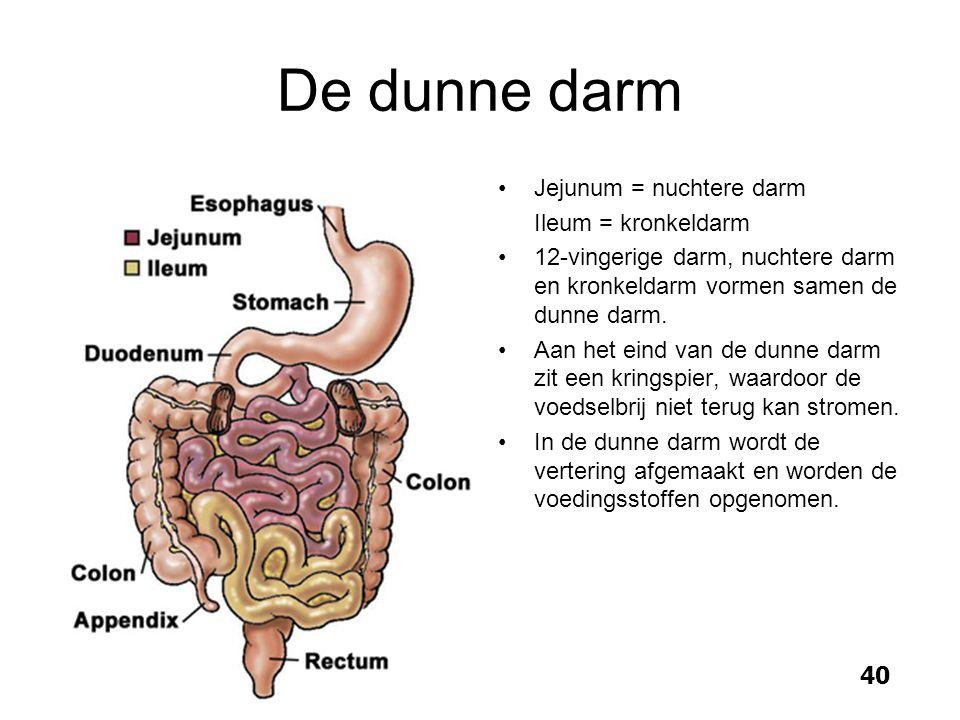 Fein Der Darm Anatomie Bilder - Anatomie Von Menschlichen ...