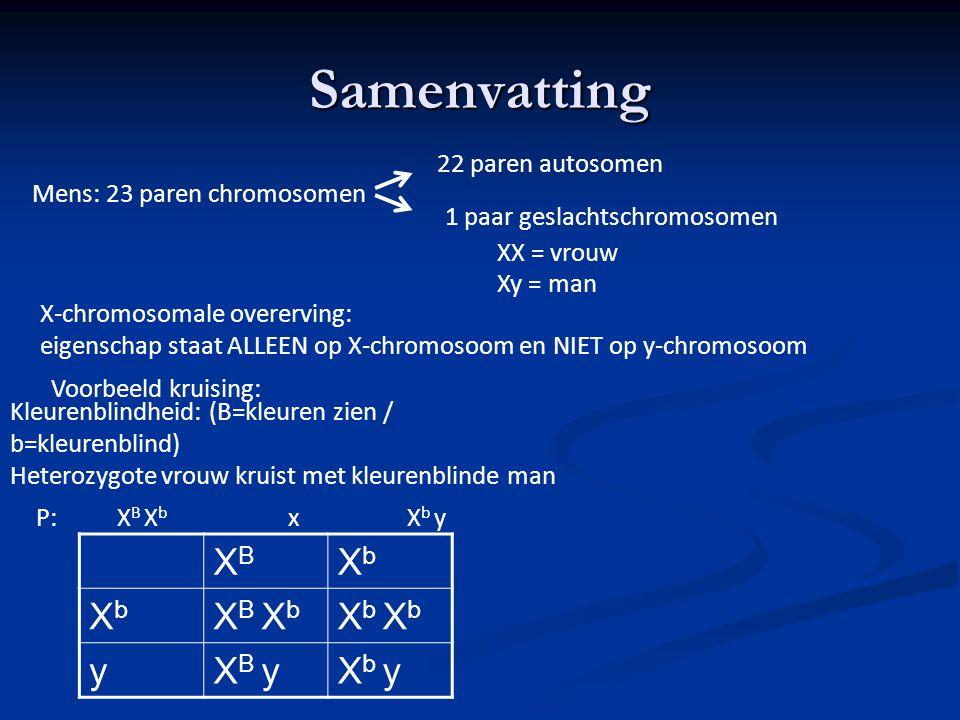 Samenvatting XB Xb XB Xb Xb Xb y XB y Xb y 22 paren autosomen