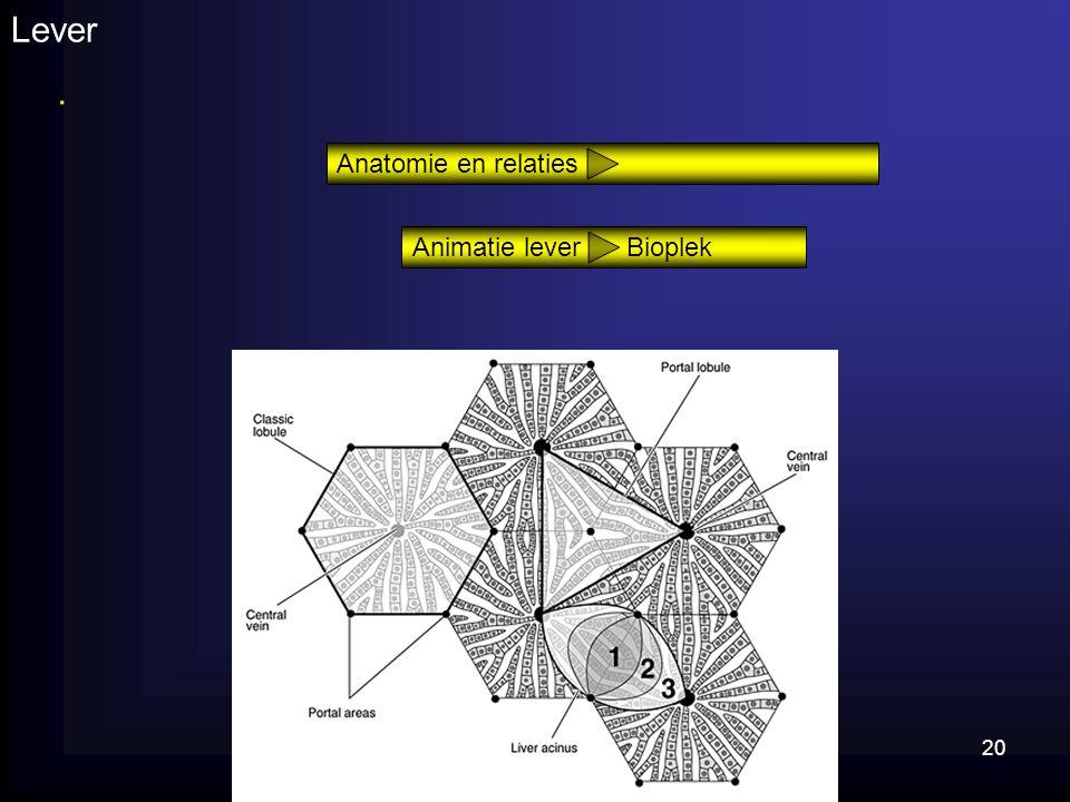 Lever . Anatomie en relaties Animatie lever Bioplek Lever