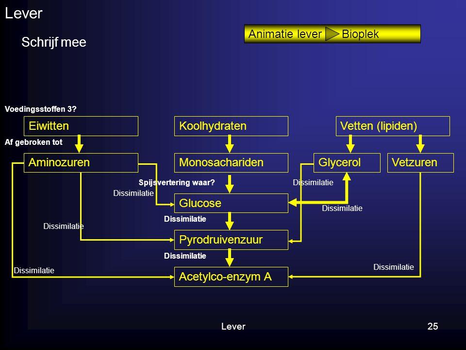 Lever Schrijf mee Animatie lever Bioplek Eiwitten Koolhydraten