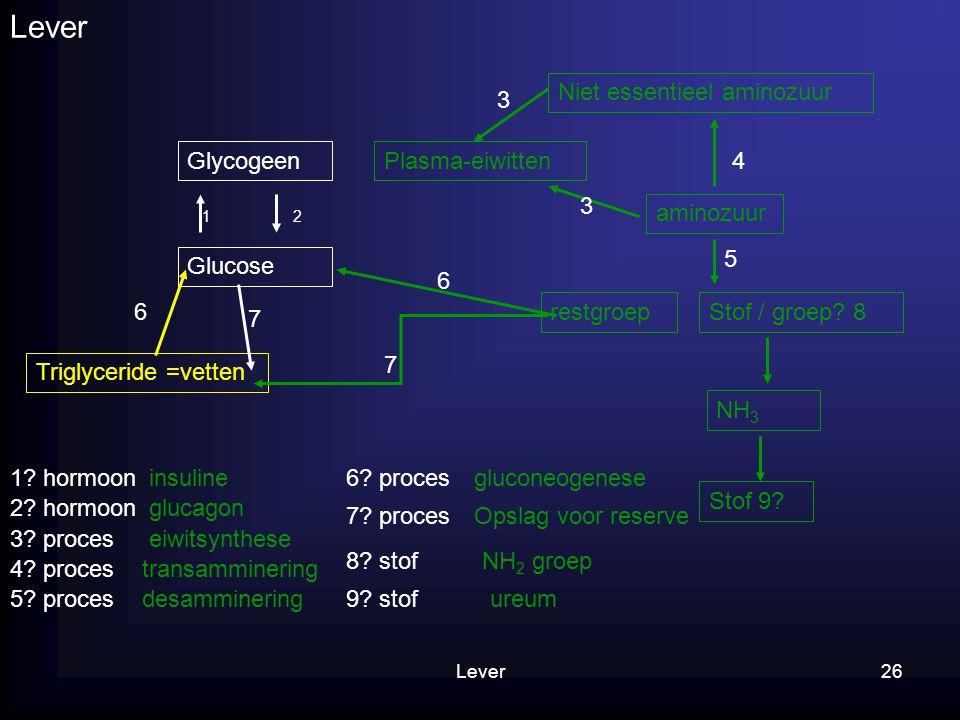 Lever Niet essentieel aminozuur 3 Glycogeen Plasma-eiwitten 4 3