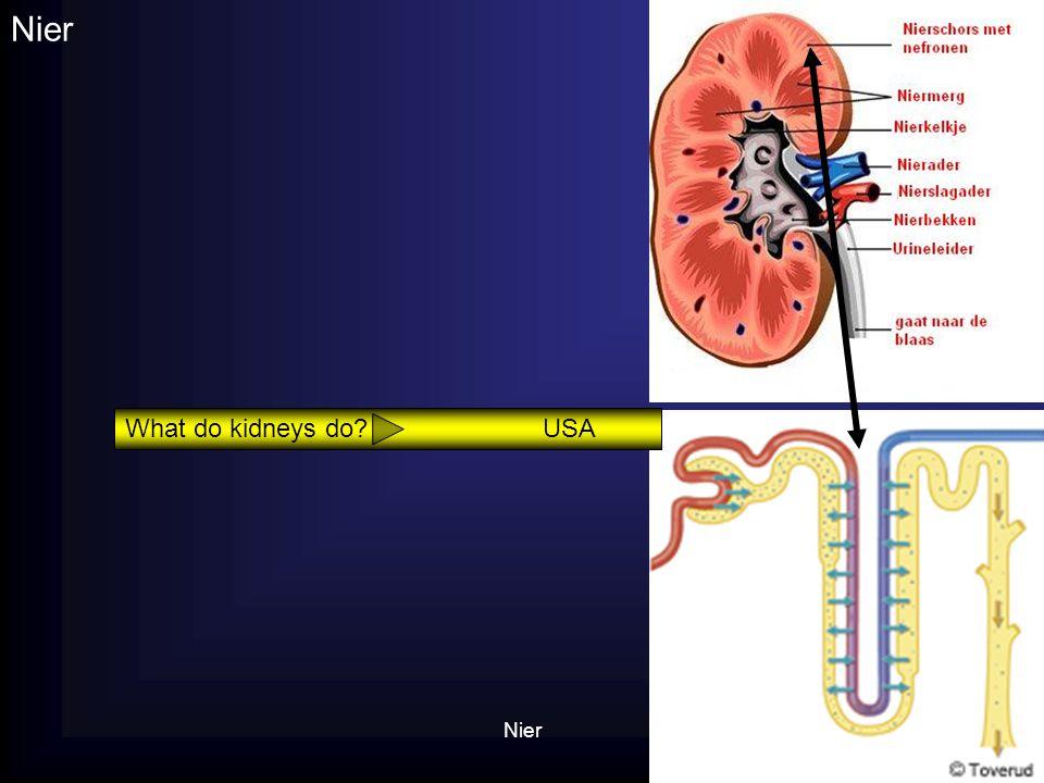 Nier What do kidneys do USA Nier