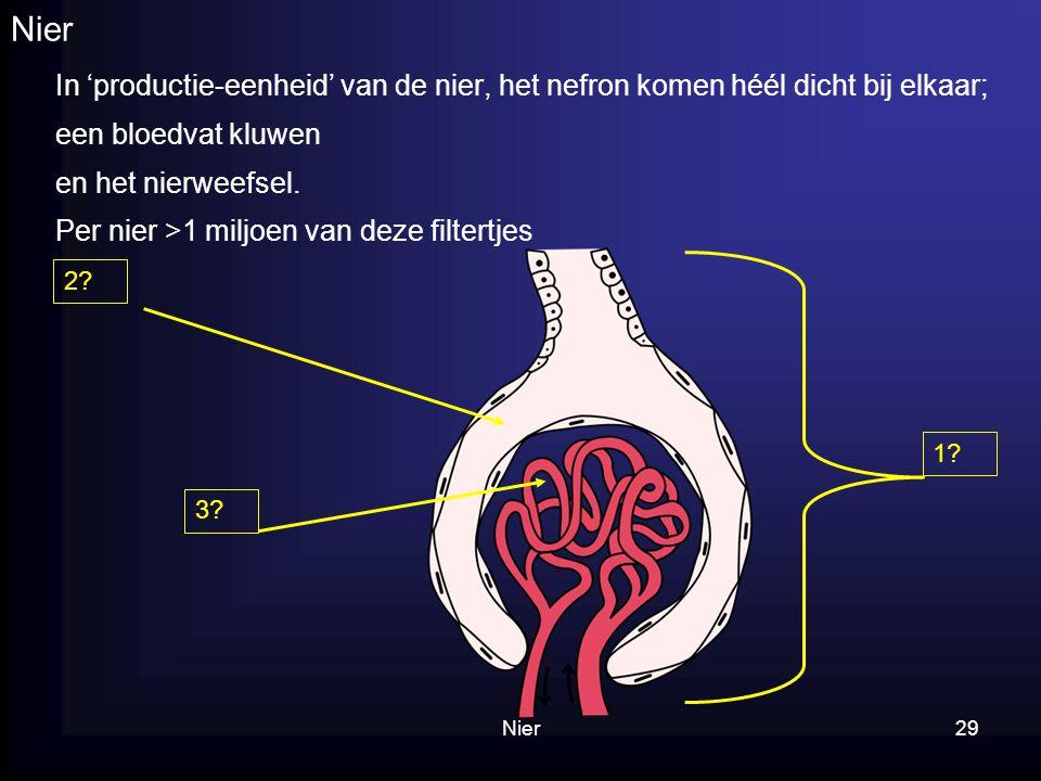 Nier In 'productie-eenheid' van de nier, het nefron komen héél dicht bij elkaar; een bloedvat kluwen.