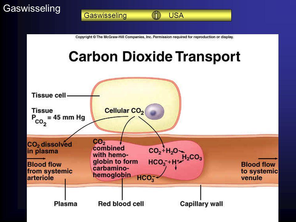 Gaswisseling Gaswisseling USA Koolzuuranhydrase