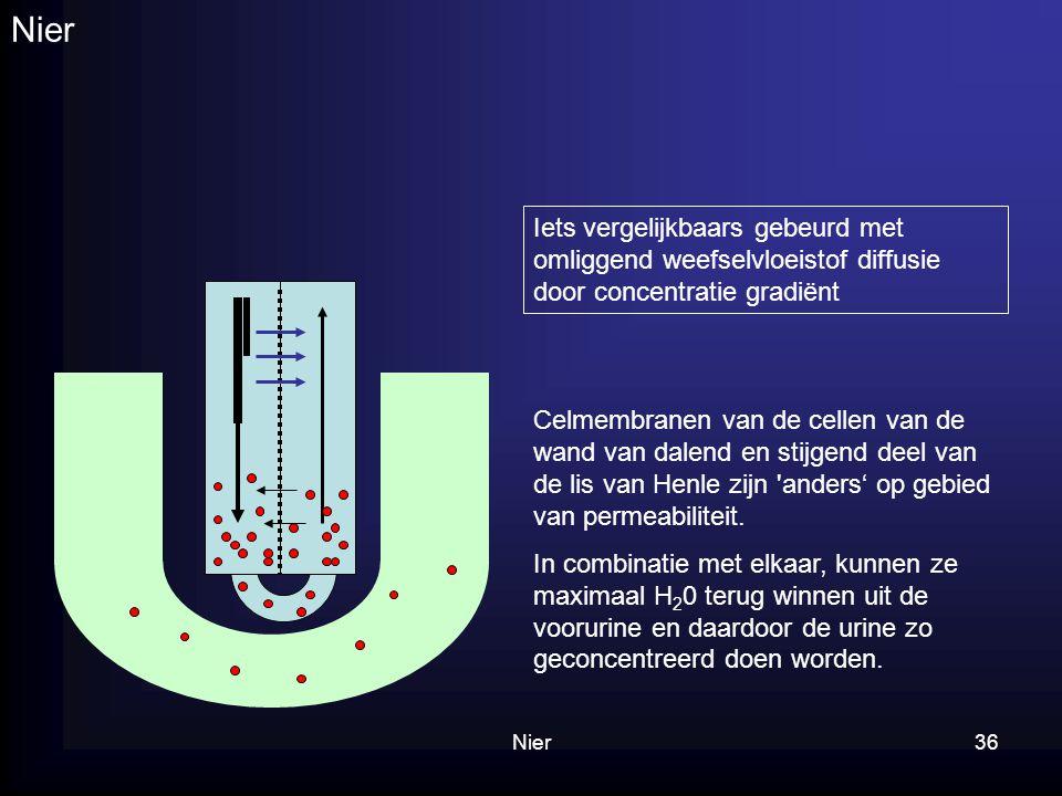 Nier Iets vergelijkbaars gebeurd met omliggend weefselvloeistof diffusie door concentratie gradiënt.