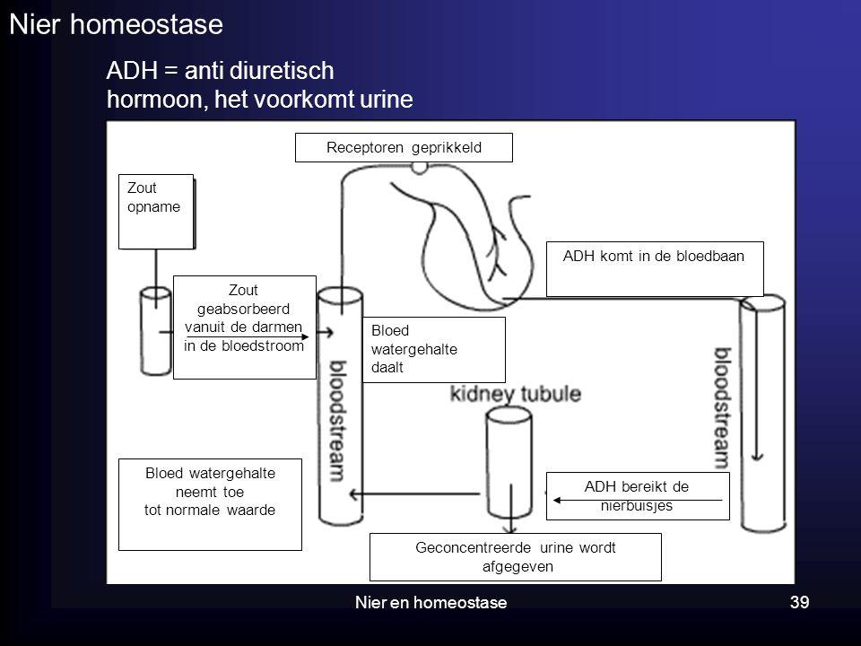 Nier homeostase ADH = anti diuretisch hormoon, het voorkomt urine