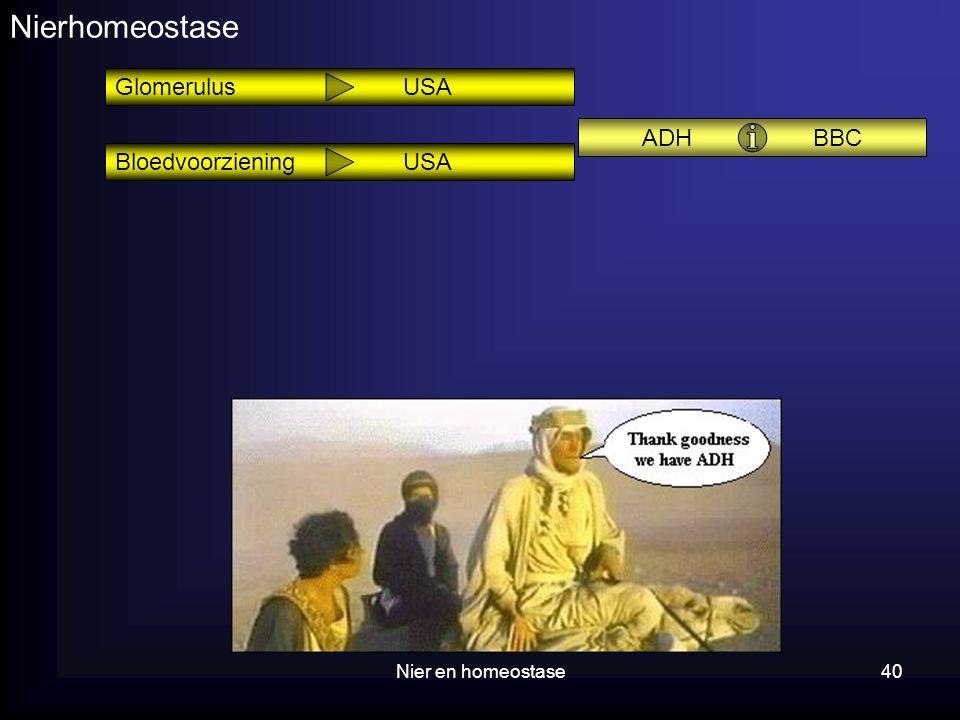 Nierhomeostase Glomerulus USA ADH BBC Bloedvoorziening USA
