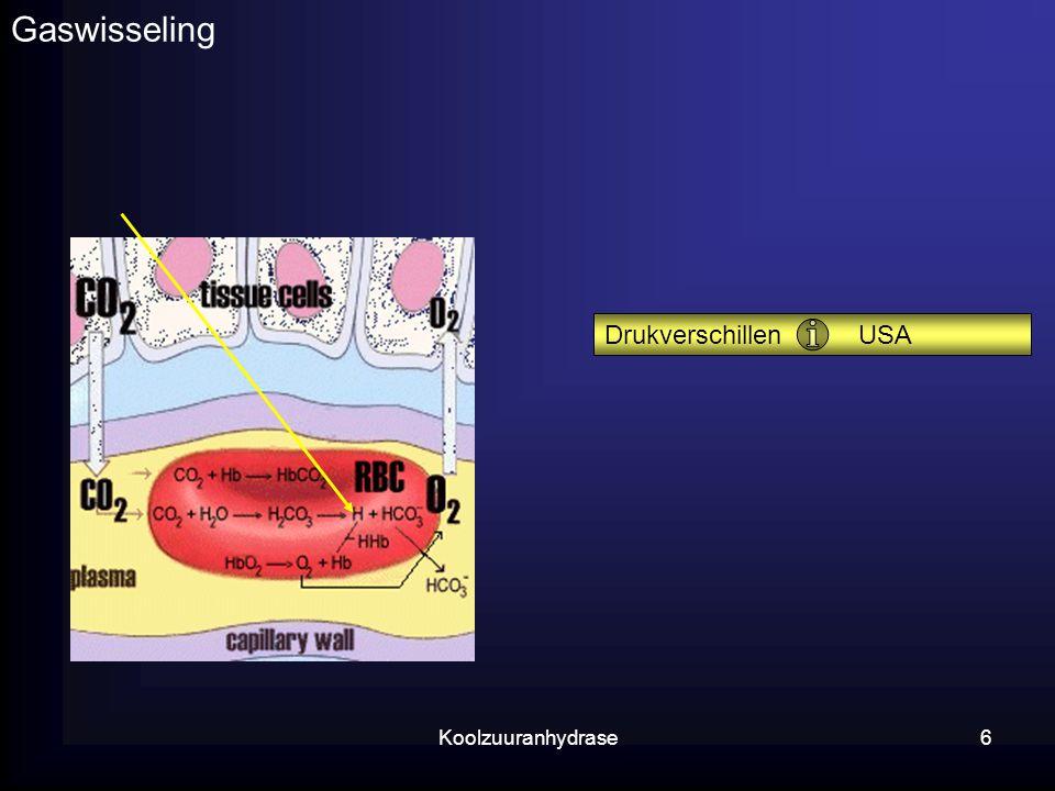 Gaswisseling Drukverschillen USA Koolzuuranhydrase