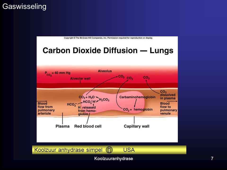 Gaswisseling Koolzuur anhydrase simpel USA Koolzuuranhydrase