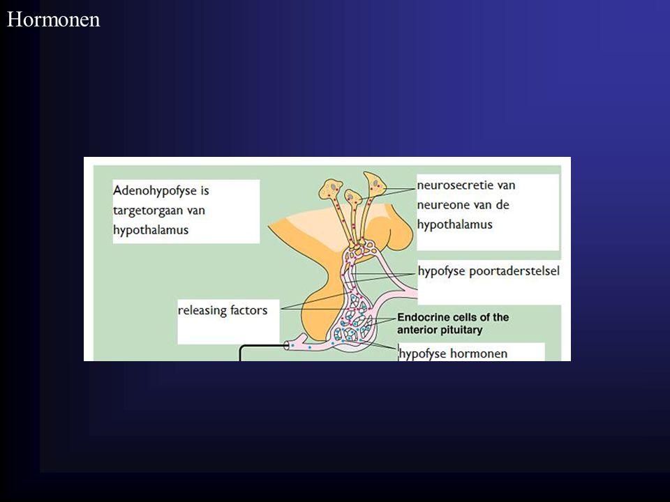 Hormonen Homeostase