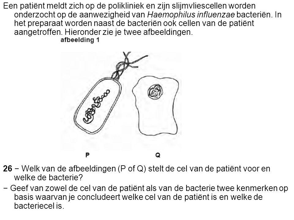Een patiënt meldt zich op de polikliniek en zijn slijmvliescellen worden onderzocht op de aanwezigheid van Haemophilus influenzae bacteriën. In het preparaat worden naast de bacteriën ook cellen van de patiënt aangetroffen. Hieronder zie je twee afbeeldingen.