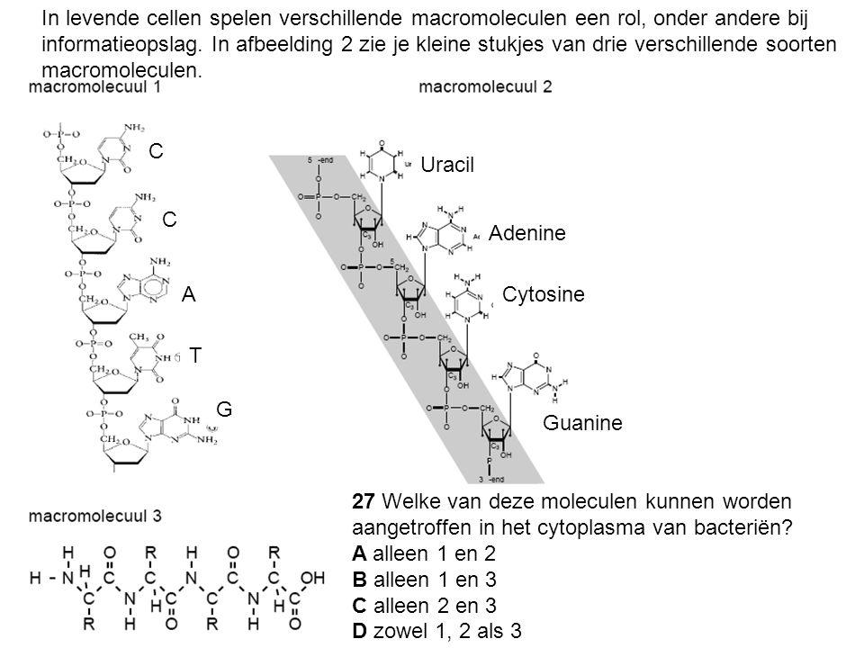 In levende cellen spelen verschillende macromoleculen een rol, onder andere bij informatieopslag. In afbeelding 2 zie je kleine stukjes van drie verschillende soorten macromoleculen.