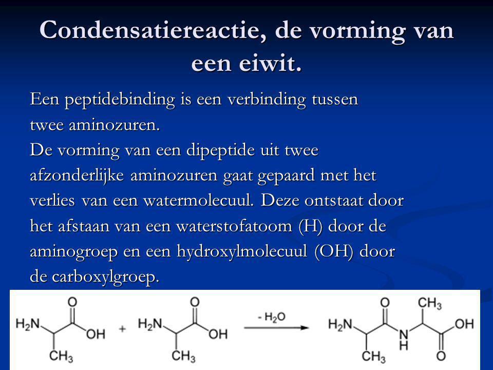 Condensatiereactie, de vorming van een eiwit.