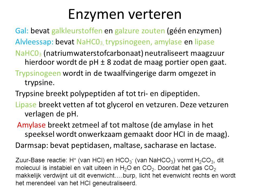 Enzymen verteren Gal: bevat galkleurstoffen en galzure zouten (géén enzymen) Alvleessap: bevat NaHC03, trypsinogeen, amylase en lipase.