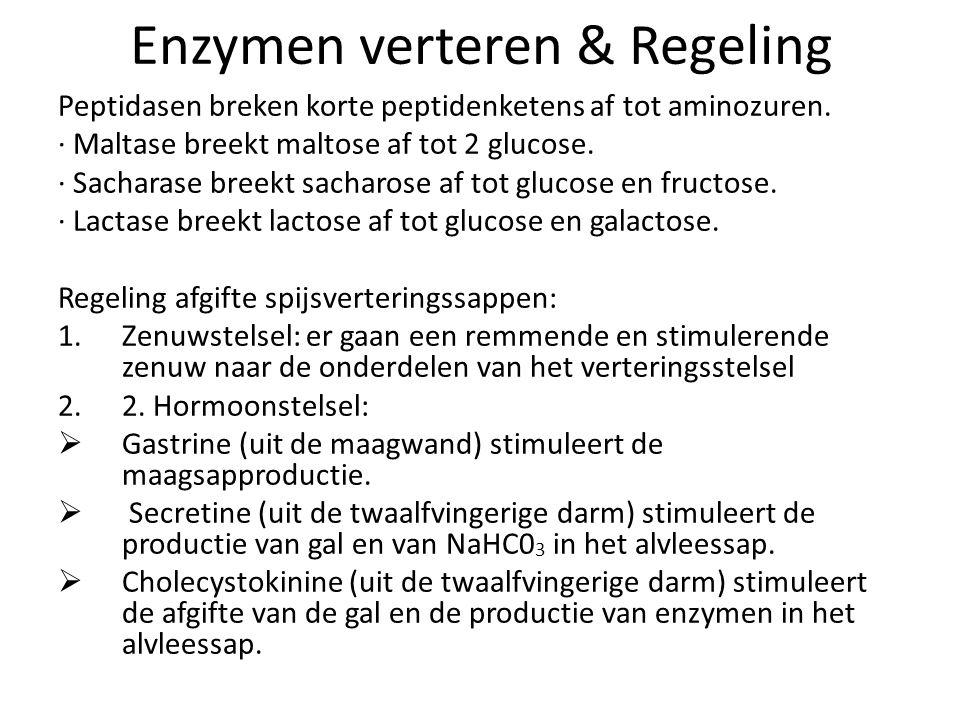 Enzymen verteren & Regeling