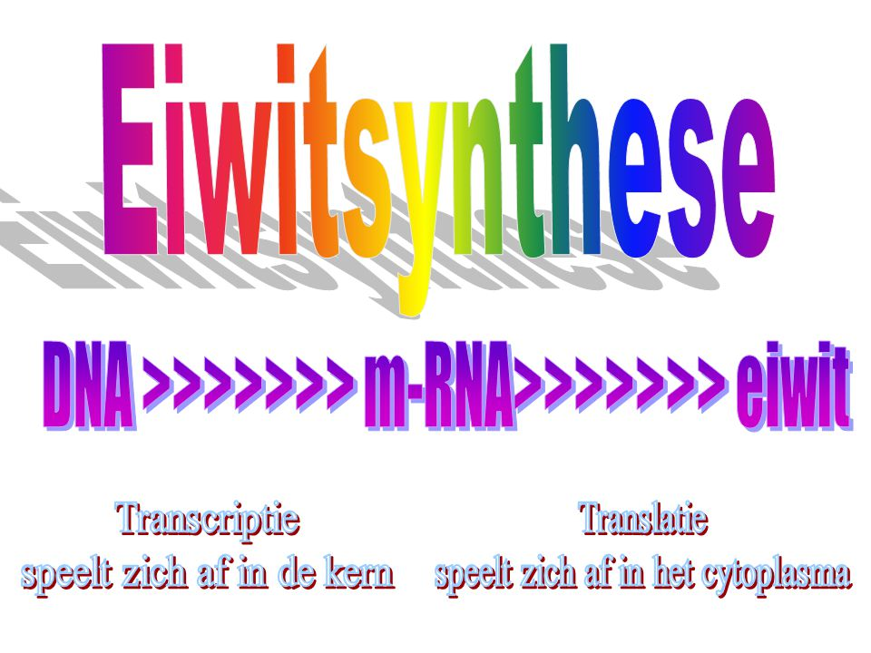 Eiwitsynthese DNA >>>>>>> m-RNA>>>>>>> eiwit. Transcriptie. speelt zich af in de kern. Translatie.