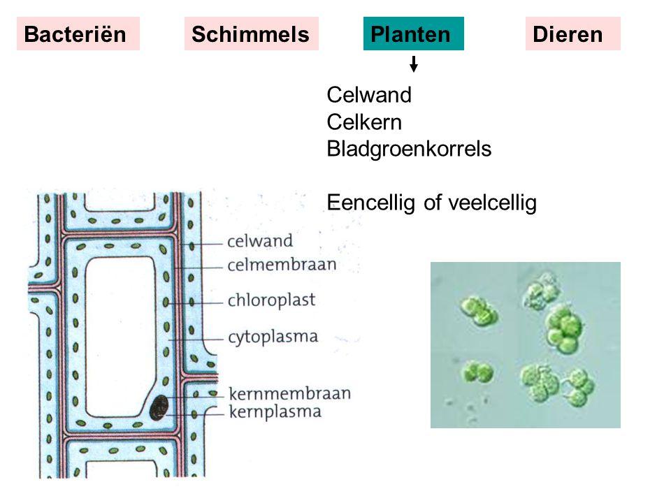 Bacteriën Schimmels Planten Dieren Celwand Celkern Bladgroenkorrels Eencellig of veelcellig