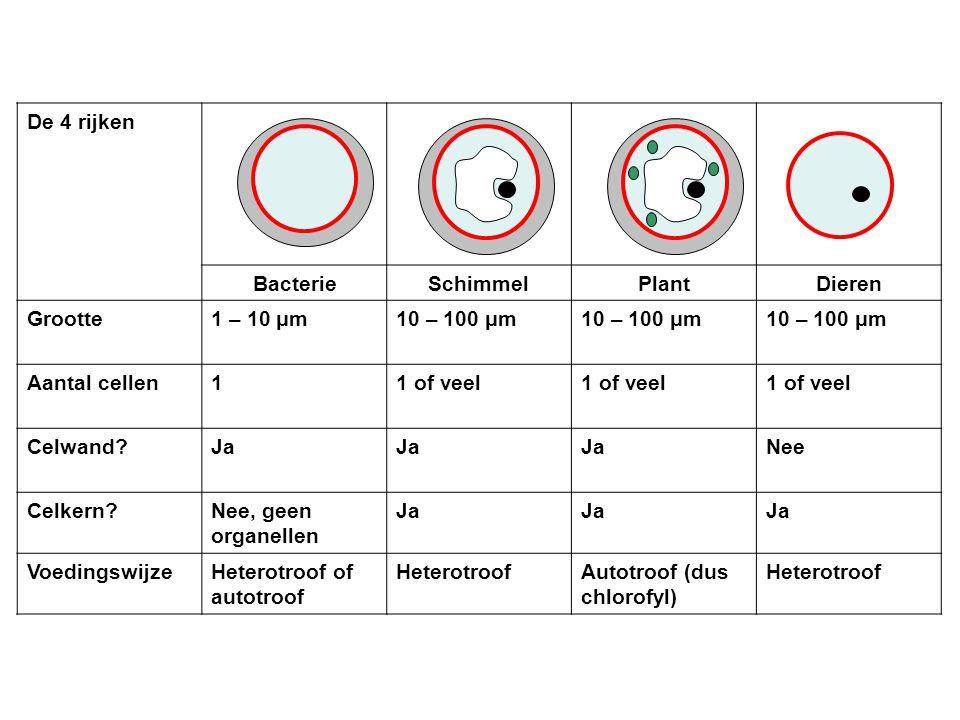 De 4 rijken Bacterie. Schimmel. Plant. Dieren. Grootte. 1 – 10 μm. 10 – 100 μm. Aantal cellen.