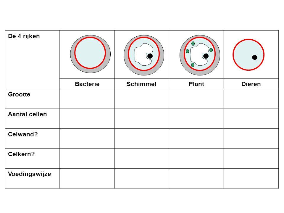 De 4 rijken Bacterie Schimmel Plant Dieren Grootte Aantal cellen Celwand Celkern Voedingswijze