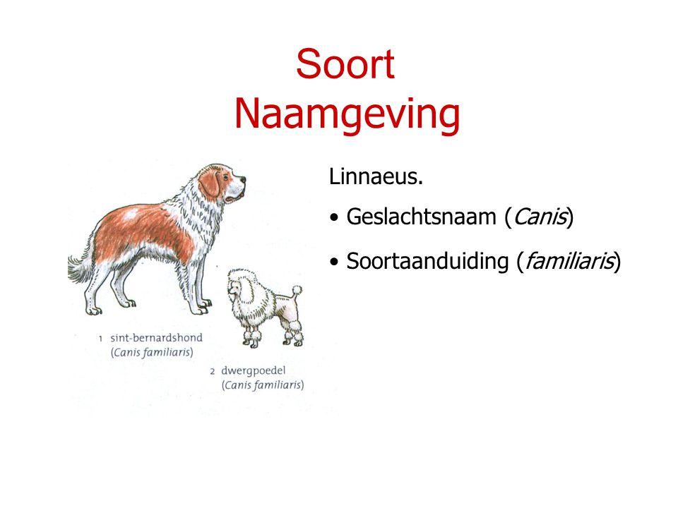 Soort Naamgeving Linnaeus. Geslachtsnaam (Canis)