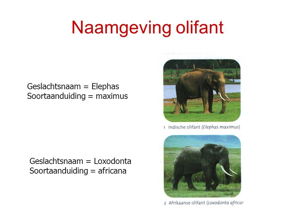 Naamgeving olifant Geslachtsnaam = Elephas Soortaanduiding = maximus